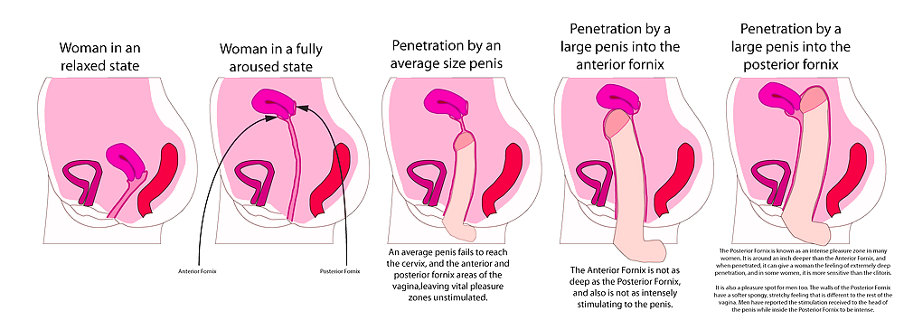 Diagrams of penis penetration during intercourse